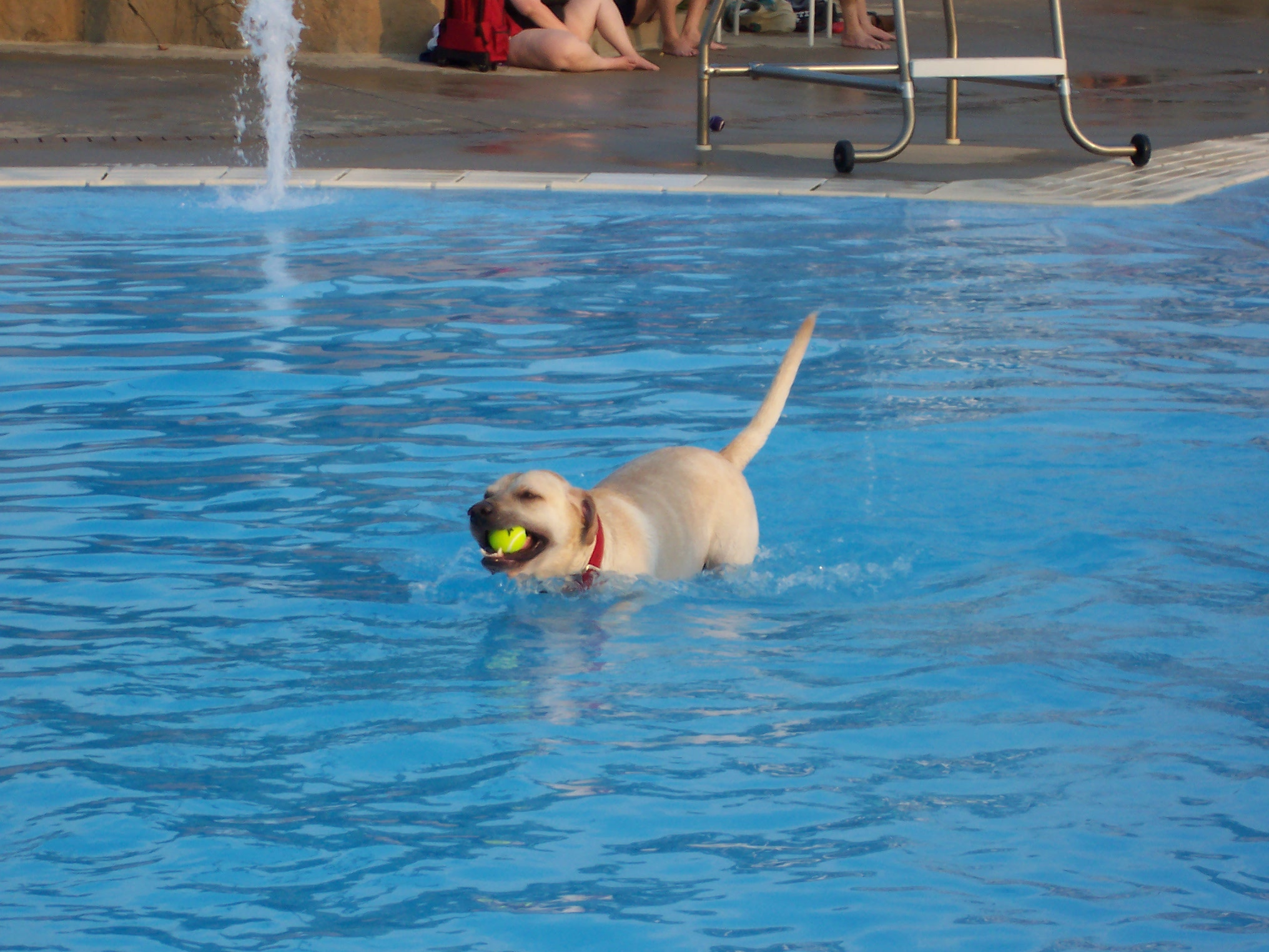 Canine cannonball play kettering Kettering swimming pool timetable