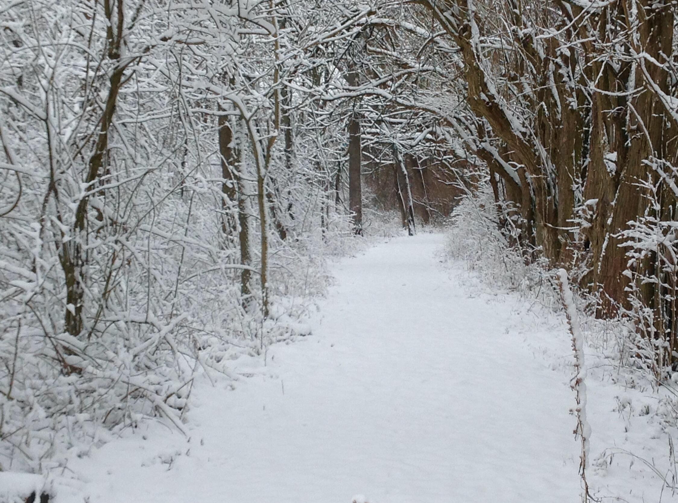 pondview winter path