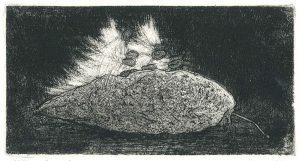 milkweed print