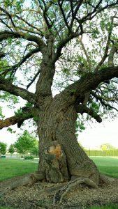 Ernst trees