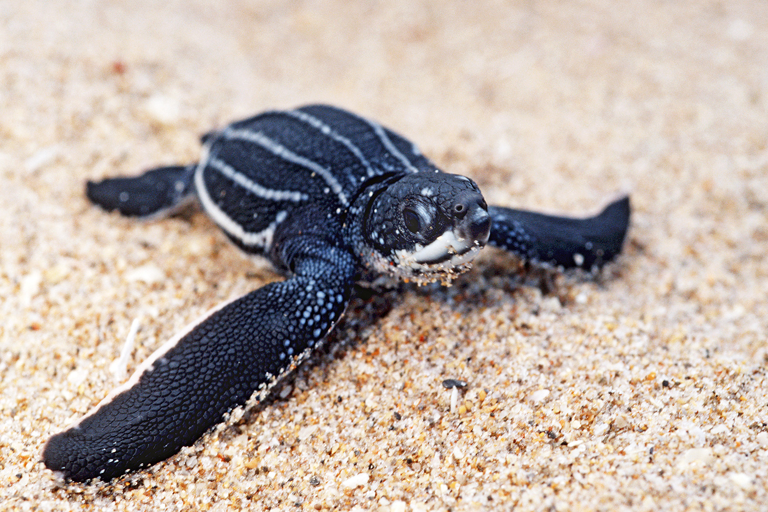 Stock Sea Turtle Image