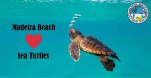 Madeira Love Sea Turtles