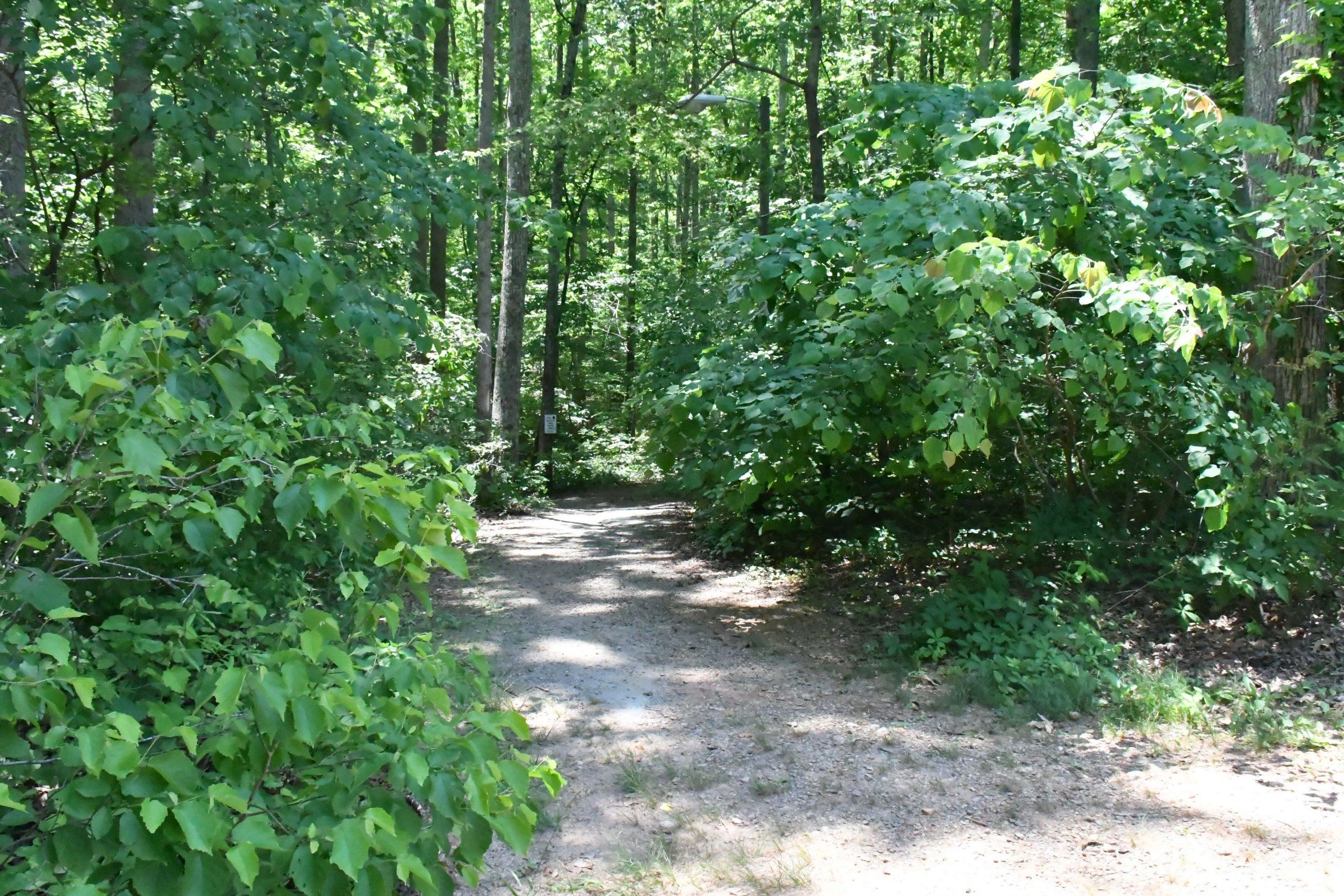 Lake Michael trail