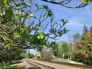 Railroad and dogwood