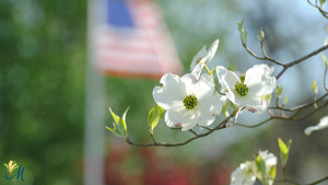 Zoom background of flag and flower