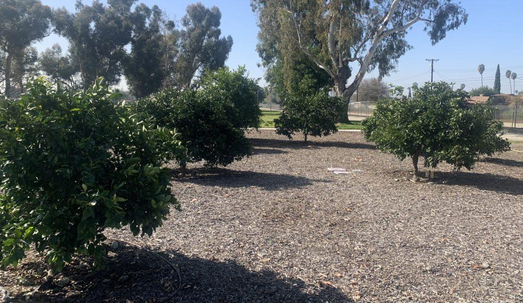 Fruit Park 2020