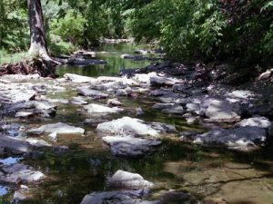 Pioneer Park Creek