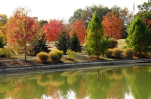 todd pond reflects fall Header