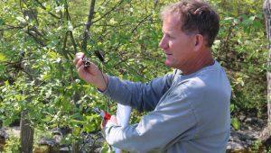 Terry tree black sap