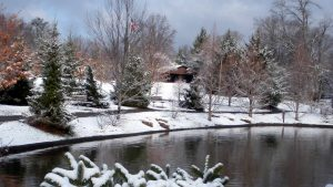 Swaim park winter