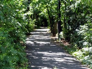 Pioneer Park Wooded Path