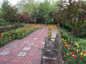 Smith Gardens Tulips