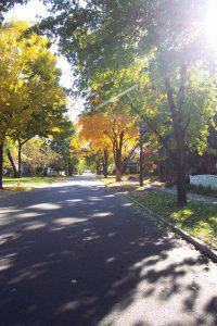 Trees StreetView