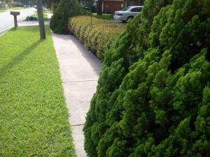 Sidewalk Encroachment