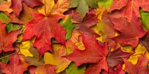 Fall Leavees