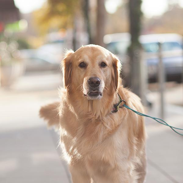photo of a dog in petaluma