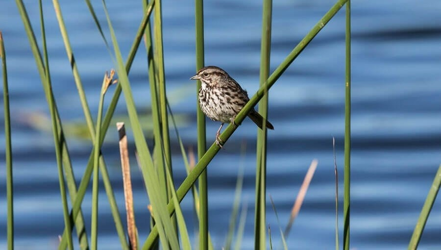 photo of bird at Petaluma Wetlands
