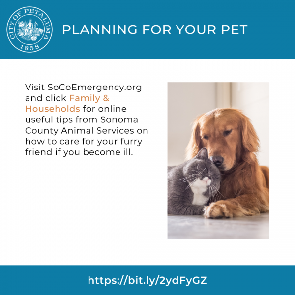 graphic for pet care in english
