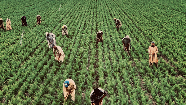 picture of rural workers
