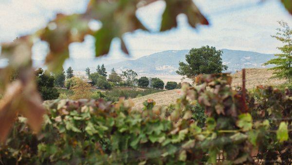 petaluma landscape
