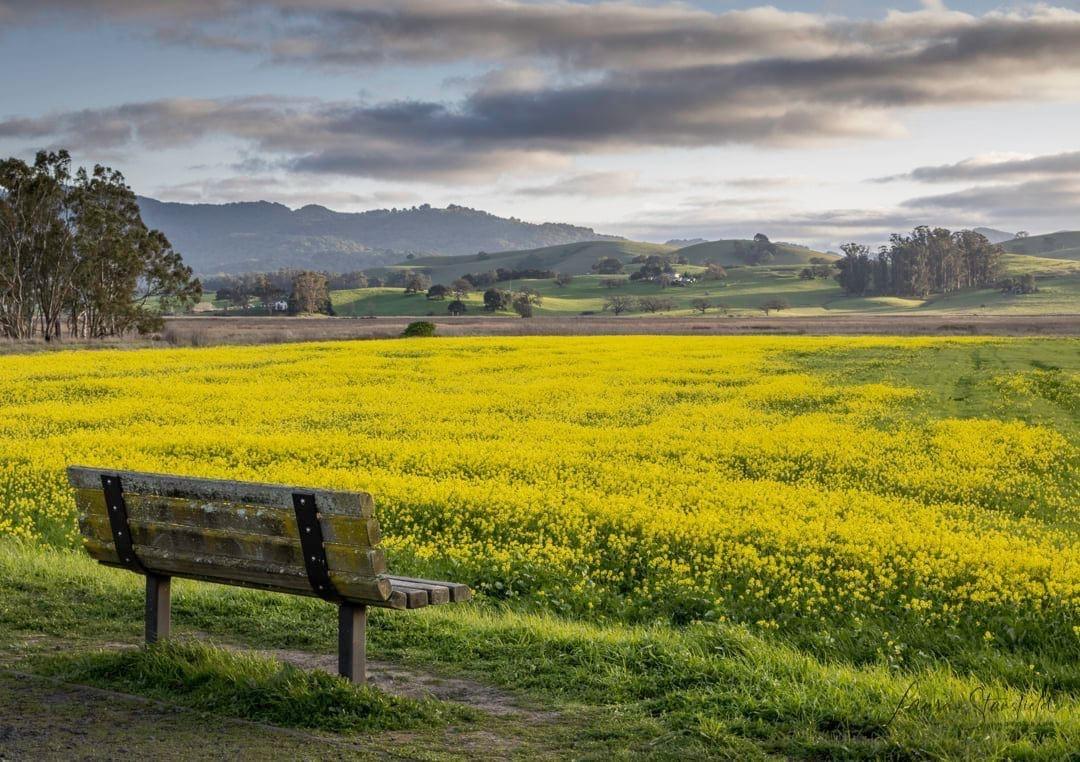 ellis creek park bench