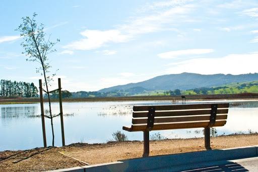 sholl bench