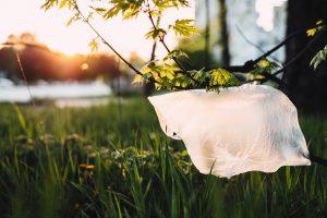 plastic bag in the wild