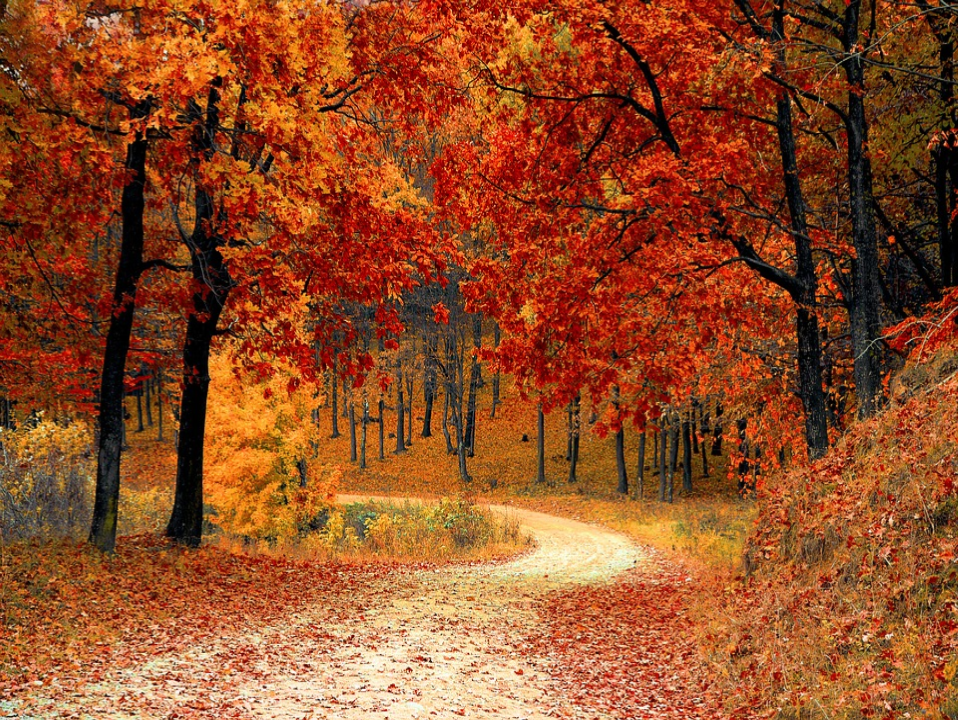 picture of trees with orange and red leaves