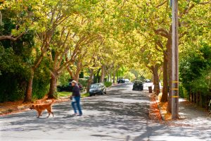 San Rafael neighborhood street scene