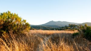 Mount Tam view