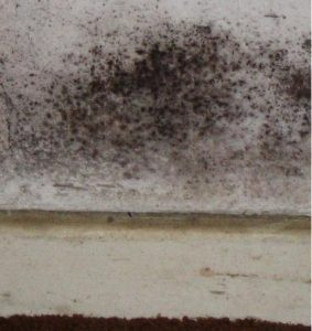 mold_in_wall_at_bedroom_floor_closeup