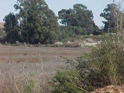 Dutra Marsh