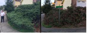 juniper removal 2018