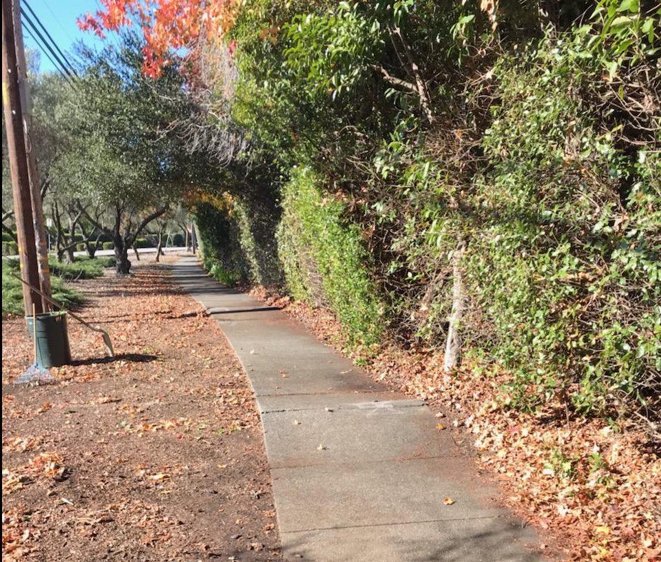 12/20/18 - 2019 Parkette Routine Landscape Maintenance RFP (rev 12
