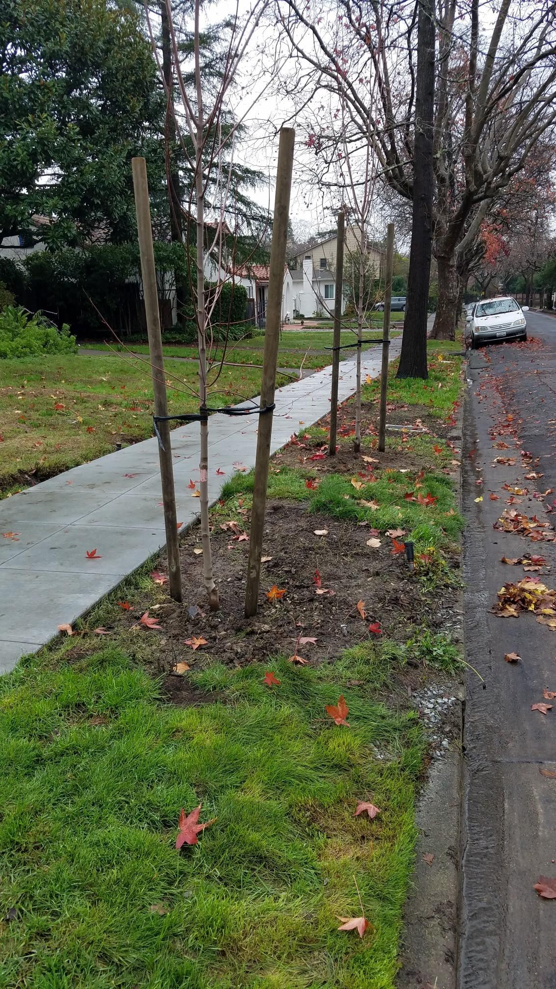 AmeriCorps Tree Planting