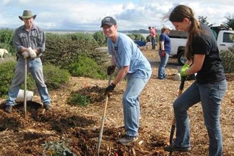 3 Tree Planting Volunteers