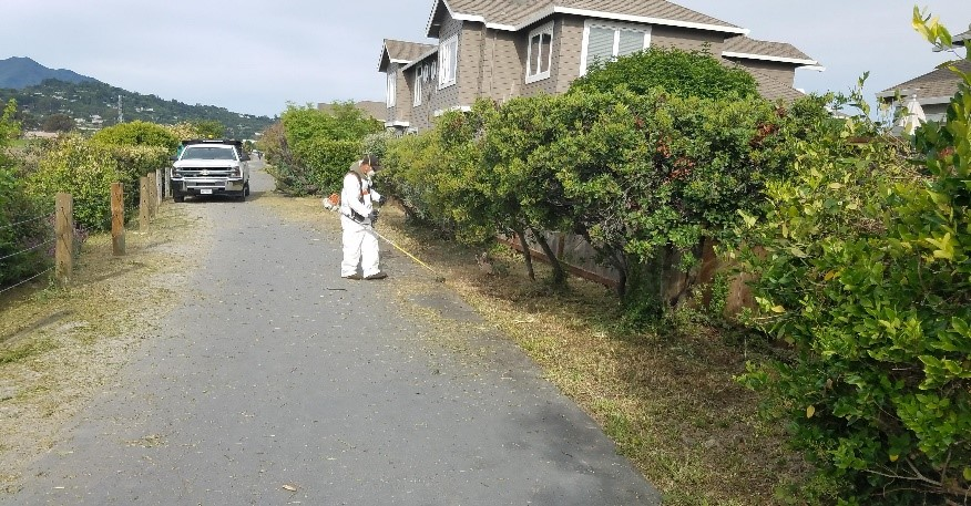 Pathway Cleanup