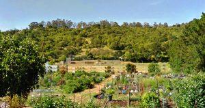Terra Linda Community Garden