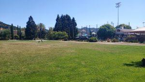 Albert Park Grassy Area