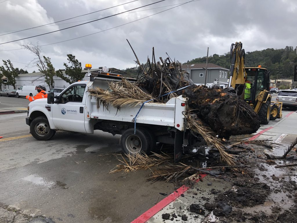 Palm Tree Removal Storms