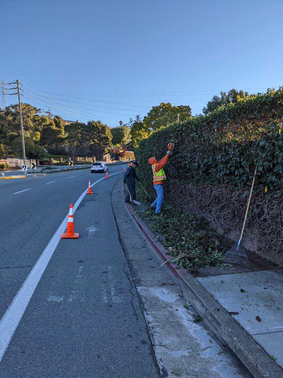 Pt San Pedro Rd vegetation trimming