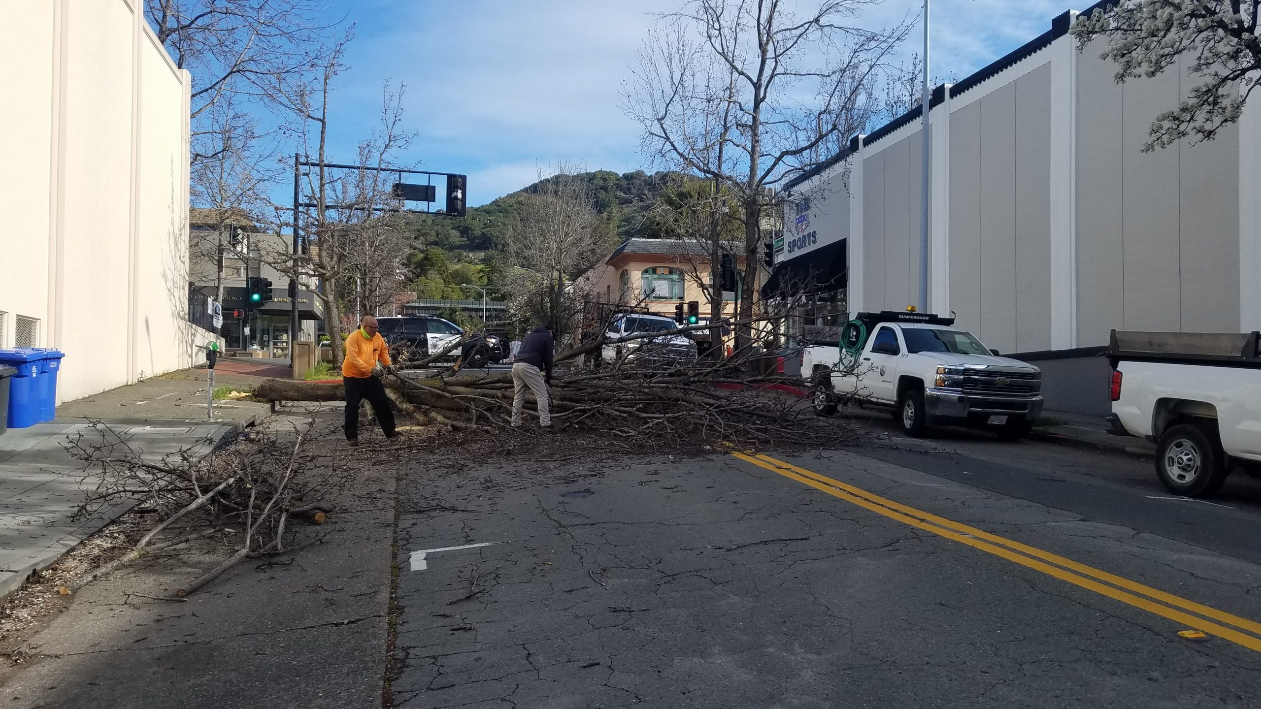 DPW tree clean up on D St