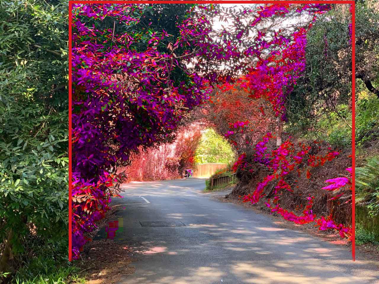 SRFD Before & After Vegetation Removal 5