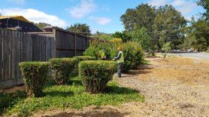 veg pruning