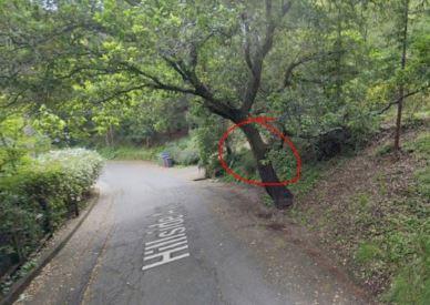 Hillside tree #2