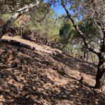 Photo of oak woodland