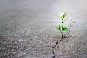 ResilientFlower