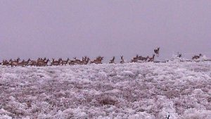 Sherman County Winter Wildlife