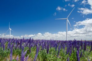 Wind turbine and lupine wildflowers