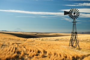 Windmill and grain field